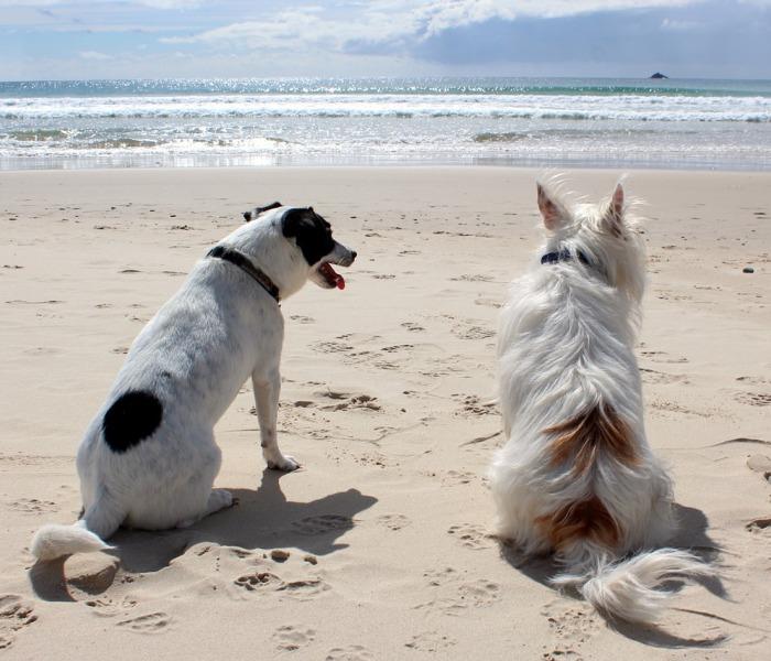 dia mundial d elos animales 4 de octubre